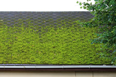 Why It's Important to Remove Moss From Your Roof
