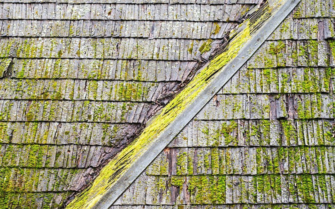 3 Signs It's Time to Clean Your Roof