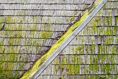 Moss Cleaning & Treatment in Milwaukie, OR