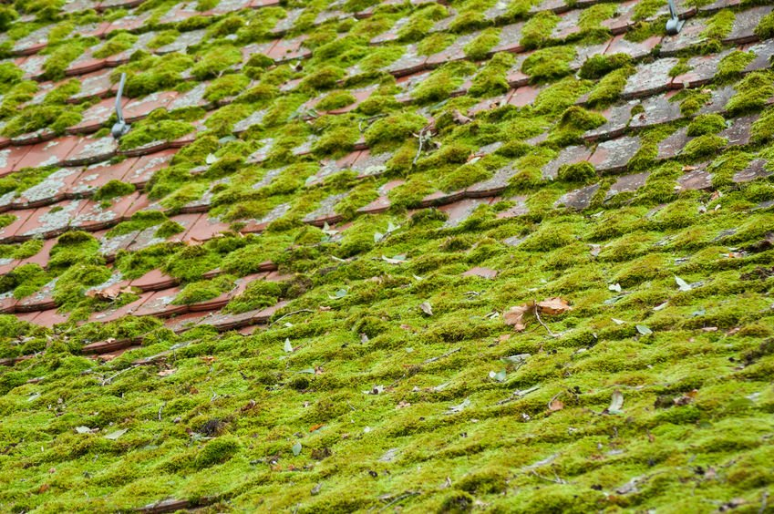 How to Prevent Moss from Growing on Your Roof